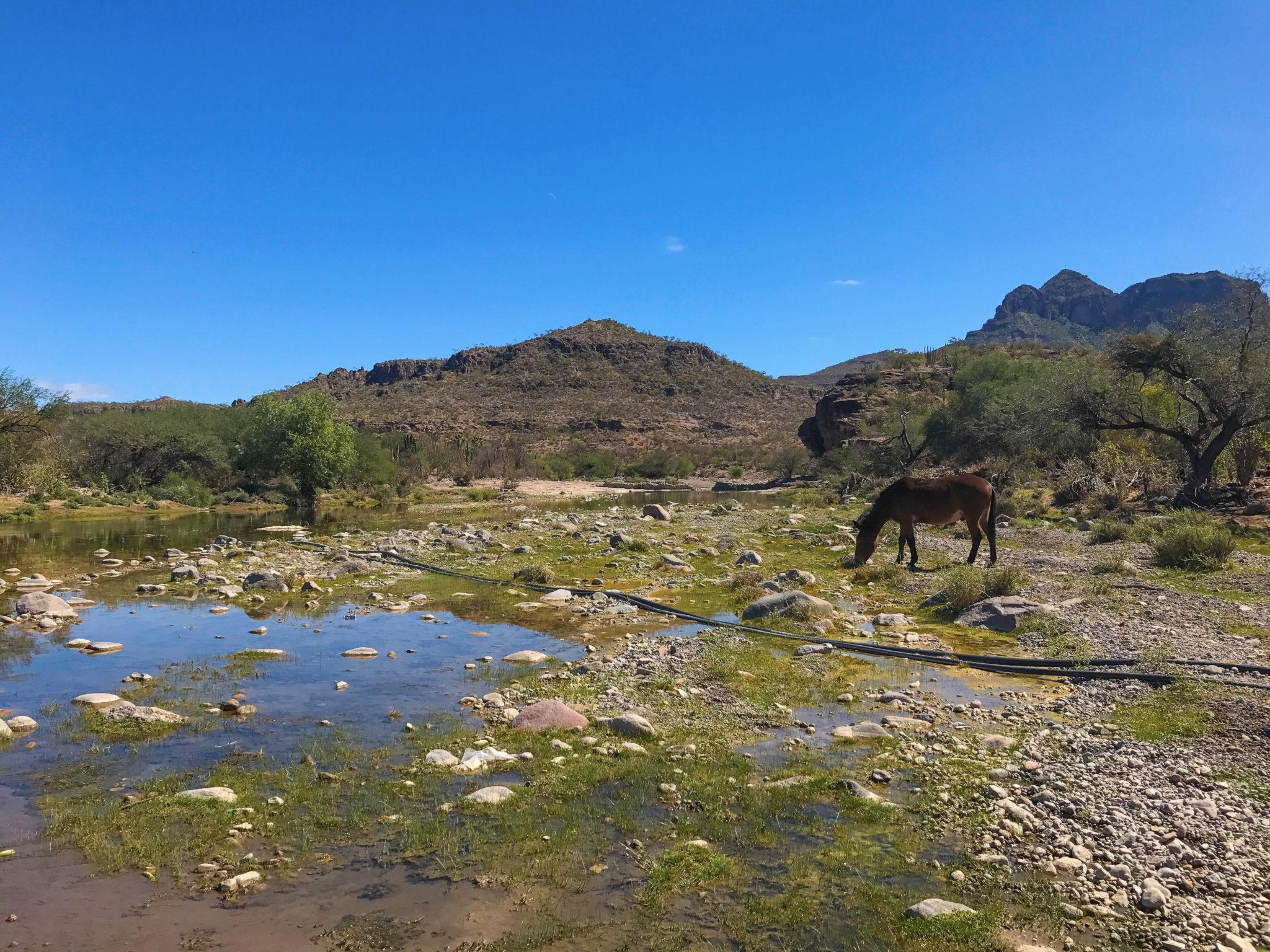 Santa Rita, Baja California Sur, México.