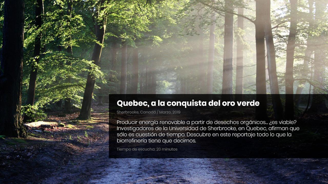 Quebec, a la conquista del oro verde